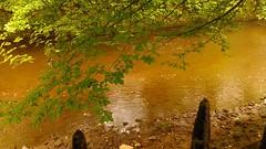 River Calder. (Portlandbill) Tags: river calder brown flood trees holmes park hebdenbridge