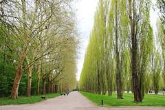 IMG_4503 (Irina Souiki) Tags: parcdesceaux france paris sceaux flowers nature parc park