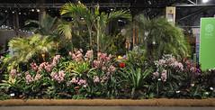 2016-03-11_0305n_waldor (lblanchard) Tags: orchid waldor displaygarden 2016flowershow