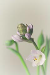 IMG_2815-2 (nancyrodeberg) Tags: macroflowers