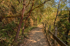 RHM_2819-1584.jpg (RHMImages) Tags: california trees foothills west fence landscape us nikon unitedstates nevadacity trail sierranevada colfax nevadacounty independencetrail d810 bylt bearyubalandtrust