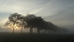 Notenlaantje in de mist en opkomende zon Park Lingezegen / Elst (corrie.nijenmanting) Tags: lingezegen notenlaantje elst gelderland nederland