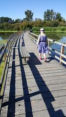 Swan Lake Bridge (wjis21) Tags: capitalregionaldistrict crd saanichparks saanich swanlake ducks ducksunlimited bridge thebridge samsunggalaxynote5 walk hike lake water christmashill parks algae trail