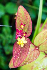 Colores del bosque (cvielba) Tags: bosque cantabrico flor oma pintado vizcaya