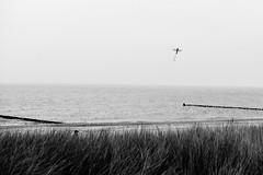 Herbst (/Holger Blaskowski) Tags: drachen wind strand mtze wasser ostsee zingst kste baltic sea darss autumn