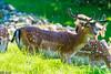 DSC_9544 (Costi Jacky) Tags: france naturereserve parcdemerlet