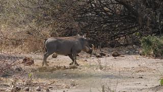 Namibia Hunting Safari - Caprivi Strip 7