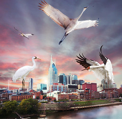 """Cranes are completely taking over the Nashville Skyline"" (Kelsey Ann Thomas) Tags: crane nashville nash tn eastnashville downtown cranes skyline city architecture photoshop manipulation edit birds giant huge takeover construction punny"