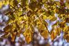 Autumn light (CARLORICCI) Tags: autumn light italy colors leaves foglie backlight vintage lago italia bokeh 85mm carlo autunno viterbo controluce lazio thelake ronciglione lagodivico bellavenere nikond800 ©copyright carloricci nikkor85mmf18g riccarlo carl㋡ oןɹɐɔcarlo