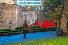 Reflection and respect (Le monde d'aujourd'hui) Tags: reflection london castle remember respect poppies ww1 remembrance moat toweroflondon