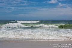 Surfers on Kommetjie Beach, Cape Town