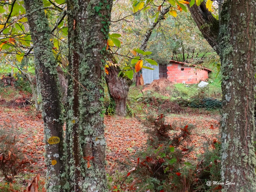 Águas Frias (Chaves) - ... cores de outono ...