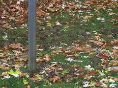 IMG_0358-1 House Sparrows (John Pohl2011) Tags: bird canon john pest scavenger pohl perching sx50hs canonsx50hs