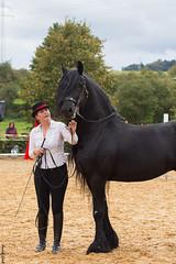 Tatjana Früh mit Ernie (HendrikSchulz) Tags: show horses horse ernie pferde pferd stallion friesen 2014 friesian hengst friese dfz bondorf zuchtschau tatjanafrüh
