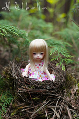 Dollzone Dongdong - Buba (Pokorszczanka) Tags: doll bjd bb dollfie buba dongdong dollzone emribelle pokorszczanka
