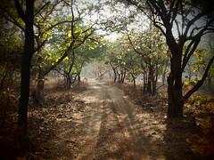 Gujarat 2014 (hunbille) Tags: park india nationalpark framed wildlife safari national sanctuary gujarat gir wildlifesanctuary sasan sasangirnationalpark sasangir girforest 15challengeswinner thechallengefactory girforestnationalpark
