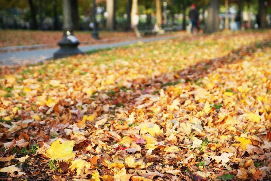波士頓秋天 boston-common-public-garden-autumn-7
