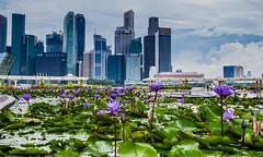Flores de Singapur (pdorta) Tags: city flowers building skyline arquitectura singapore asia ciudad cbd singapur rascacielos