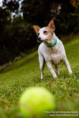 Mia and her Ball