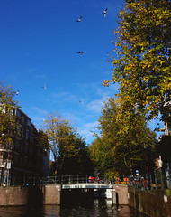 (gata Tomaselli) Tags: street city bridge blue autumn trees streets holland tree green fall nature netherlands beautiful leaves amsterdam birds bike canal flying leaf europe low bluesky canals bicicle outono coutries bicicles