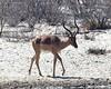 Botswana Hunting Safari 31