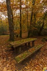 2014_079 (kgorka) Tags: autumn canon landscape hojas sigma paisaje otoño kata afco cantabria manfrotto ucieda cantabriainfinita concordians canon7d gorkabarreras sigma1020f35 canonikos kgorka