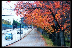 nEO_IMG_DP1U2287 (c0466art) Tags: nov trip travel blue autumn trees light sky castle leave pool rain japan canon photo colorful northeast 2014 famouse  1dx c0466art