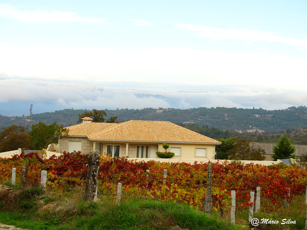 Águas Frias (Chaves) - ... a vinha ... a casa ... a névoa ...