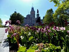 Htel du parlement (joanie.vaillancourt) Tags: flowers spring quebec parliament