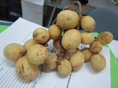 LANZONES (PINOY PHOTOGRAPHER) Tags: world fruit asia philippines mindanao zamboanga lanzones