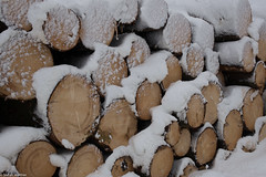 a little bit wood (picturesbywalther) Tags: wood holz woodpile stapel holzstapel
