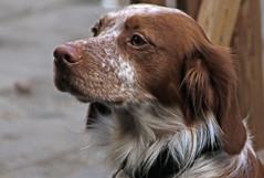 IMG_0186 (Egg2704) Tags: espaa spain zaragoza perro fotos perros animalia aragn granfoto superfotosextraordinarias egg2704
