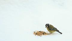 bird 1 (leurne) Tags: winter france cute nature birds animal