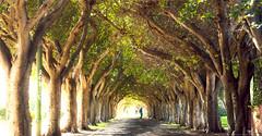 Parque de la Liga Arabe (adicsapic) Tags: casablanca pinoyphotog parquedelaligaarabe