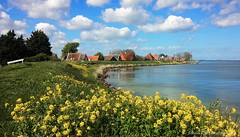 The village of Uitdam (Johan Konz) Tags: flowers blue red sky white green water netherlands field grass yellow clouds landscape spring outdoor roofs serene springtime waterland waterscape rapeseed ijmeer seadike uitdam uitdammerdijk