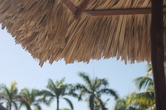 A distant memory... (MomOfJasAndTam) Tags: trees roof vacation palms carribean palmtrees thatch puntacana thatchroof