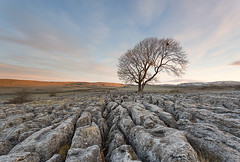 lone tree malham (matty brooks) Tags: tree clouds sunrise rocks yorkshire limestone northyorkshire lonetree malham yorkshiredales limestonepavement leefilters canon5dmkiii