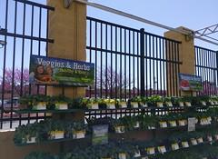 Walmart Collierville, massive 80's style garden center fence (l_dawg2000) Tags: usa classic retail vintage store unitedstates tn tennessee walmart 90s collierville 2014 remodeled gardencenter supercenter discountstore labelscar poplarave petsupplies 2013 projectimpact automotivesupplies expandedstore