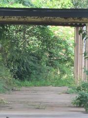 IMG_2305 (amysusanne) Tags: urbandecay barnesvillega barnesville barnesvillegeorgia deadschool barnesvilleprimaryschool