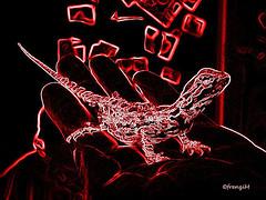 Bruce in Freddys Hand (frenziM) Tags: art artistic catchy beardeddragon pogona bartagame creativephotography dragonbarbu