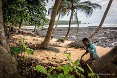Coconut Breat (Fursa) Tags: africa portrait sao tome principe zoyanaskova