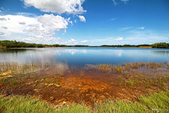Ninemile Pond - Everglades National Park, Florida (Andrea Moscato) Tags: park blue sky orange parco usa white lake reflection green nature water grass clouds america landscape lago us nationalpark nuvole view unitedstates natural vivid natura national cielo swamp vista np paesaggio freshwater statiuniti naturale andreamoscato