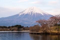 Fuji II (Douguerreotype) Tags: pink mountain water japan clouds cherry landscape volcano fuji blossom cherryblossom sakura