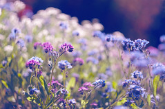 Silently, one by one, in the infinite meadows of heaven, Blossomed the lovely stars, the forget-me-nots of the angels (Paulina_77) Tags: pink blue sunlight blur flower color green nature floral colors beauty leaves vintage lens prime spring nikon colorful soft poetry mood moody colours dof purple bright blossom bokeh outdoor background magic creative dream mother meadow vivid poetic illuminated depthoffield soviet ethereal m42 bloom romantic dreamy forgetmenot shallow manual elegant sunlit delicate dreamlike russian tones magical daydream depth swirly springtime selective subtle helios blooming springlike 582 444 focusing d90 helios44 bloomy 44m4 bokehlicious helios58mmf2 nikond90 pola77