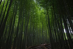 Path of Bamboo forest (tez-guitar) Tags: wood summer green forest temple kyoto pentax sigma bamboo pentaxart
