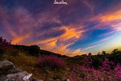 (Salim El Khoury) Tags: flowers sunset sky lebanon sun flower color colour nature beauty clouds composition landscape nikon colorful view perspective colourful cedars combination barouk d7200