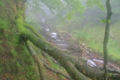 Parque natural de #Gorbeia #Orozko #DePaseoConLarri #Flickr -101 (Jose Asensio Larrinaga (Larri) Larri1276) Tags: 2016 parquenatural gorbeia naturaleza bizkaia orozko euskalherria basquecountry
