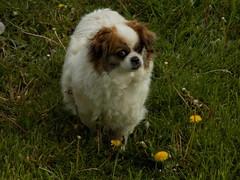 DSCN0187 (Alexandra Palici) Tags: cane curious caine