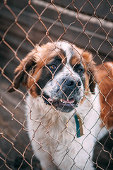 Malvina (sheltersirius) Tags: charity dog cute dogs puppy canine ukraine help sirius breed shelter adopt donate adoptable