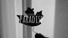 PARADISE (jjpereznunez) Tags: music white black art leave poetry artistic monocromatic conceptual inspirational inspire courtains youtube
